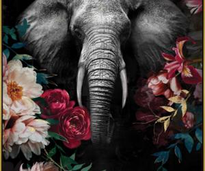 tableau encadré éléphant