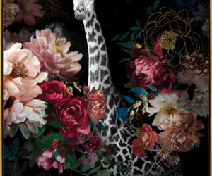 tableau fond noir girafe
